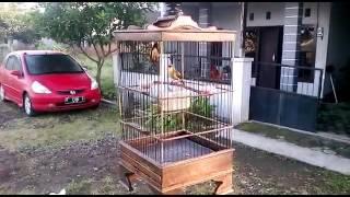 Burung Tembakan MaK Lampir