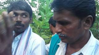 Mahesha Mulberry Kadukothanahalli Taken Only In ZBSF ZBNF Of Subhash Palekarji -