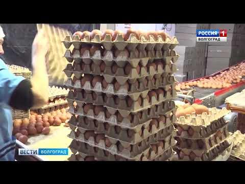 Управление Россельхознадзора проводит профилактические мероприятия по предупреждению и недопущению возникновения очагов птичьего гриппа на территории Волгоградской области