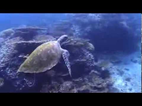 Daynamiat und Walhaie, Daymaniyat Inseln,Oman
