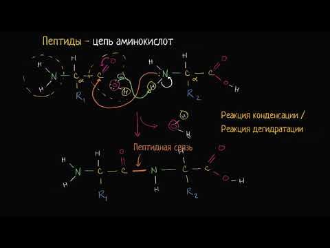 Образование пептидных связей (видео 9) | Макромолекулы  | Биология