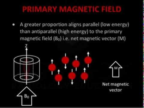 Introduction To MRI Physics