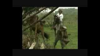 Mi Muchacha Linda - Jose Gregorio Matos  (Video)