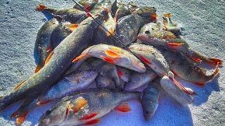 Рыбалка зимой на блесну и балансир