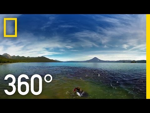 Swimming with Bears 360°