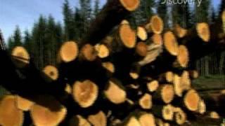 HowStuffWorks - Wood Appeal
