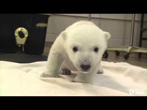 Những bước đi đầu tiên của gấu con, yêu tóa !