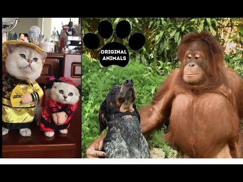 Original Animals #16. CUTE AND FUNNY ANIMALS VIDEO/ МИЛЫЕ И СМЕШНЫЕ ЖИВОТНЫЕ.