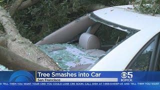 TREE CRASHES INTO CAR: A massive tree toppled onto car in San Francisco
