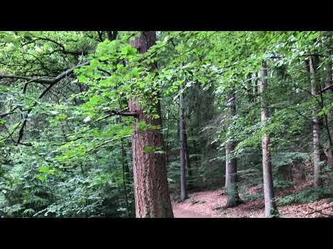 Download 8 Hour Nature Sound Relaxation Soothing Forest Birds