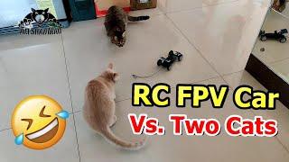 Emax FPV Car Chasing Cats little pilot flight master LCD