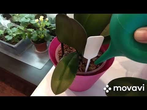 Первый полив орхидеи после пересадки.Какие горшки не нужно покупать новичкам в мире орхидей.