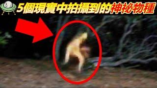5個現實中拍攝到的神秘物種
