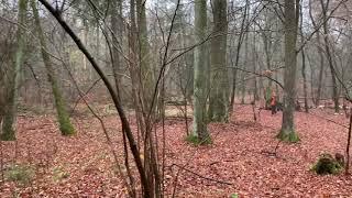 Video Treibjagd im Brieselanger Forst