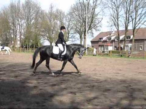 Eerste concours Overloon C'est bon ( v. Dayano ) 2-4-2011