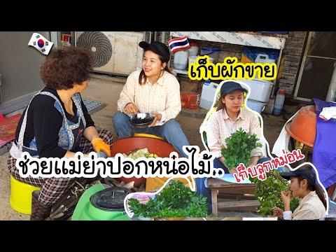 ช่วยเเม่ย่าปอกหน่อไม้/EP.132/เก็บผักไปขาย/กินลูกหม่อนอร่อยๆที่บริเวณบ้าน/สะใภ้เกาหลี by Korean