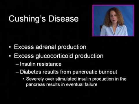 Video Cushing's Disease