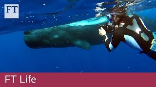 Free-diving with sperm whales off the coast of Dominica