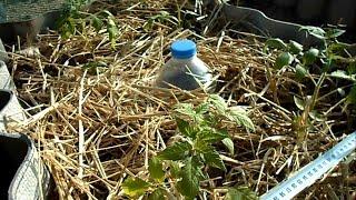 Капельный полив бутылками и инструкция по применению!