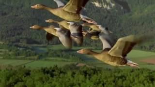 Группа Рождество  - Улетают птицы
