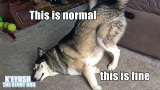 Key The Husky Making You Laugh! Subtitled! TRY NOT TO LAUGH!