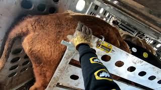 Kill Cows Episode #2