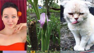 Переезжаю в село| Природа|Ращу волосы| Кому кота?| Не информативный влог!!!