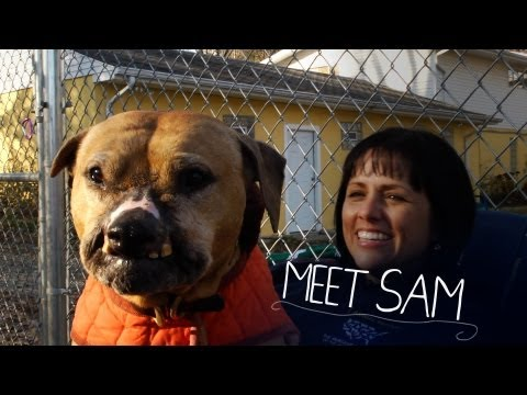 Rescued from the Fighting Pits - Sam`s Story