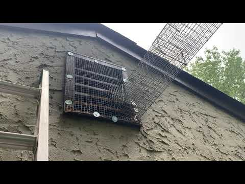 Definite Entry Point for Squirrels in Edison, NJ
