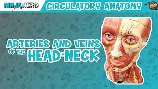 Circulatory System | Arteries & Veins of the Head & Neck | Head Model