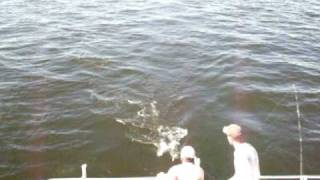 Chesapeake Bay Fishing Action #5