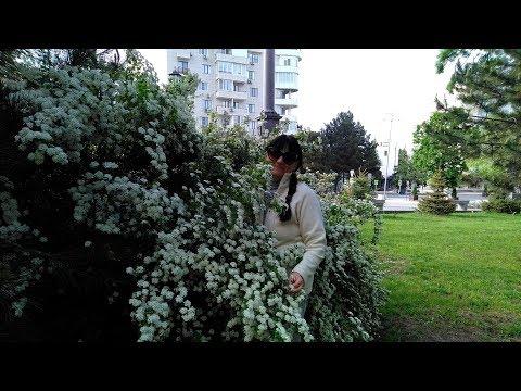 АНАПА Поликлиника  //  Ранняя, утренняя прогулка по Анапе  //  Посылка с цветочками