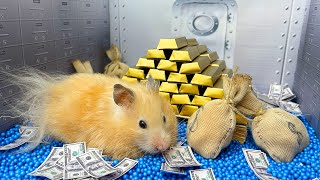 🐹 Hamster escapes the Bank Robbery Maze! 😲 Real life Police traps for hamster