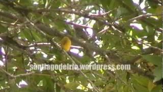 preview picture of video 'Parque Villarino - Zavalla - Santa Fe'