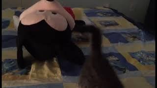 Игривый котик советуем взглянуть | Приколы до слез - Collab #173
