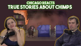 Chicagoans React to True Stories About Chimps by Sam O'Nella