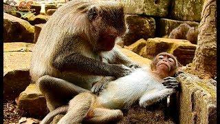 Finally ! Nanda Kneeling beg groom from mom successful| Nanda fall asleep with sad face worry next