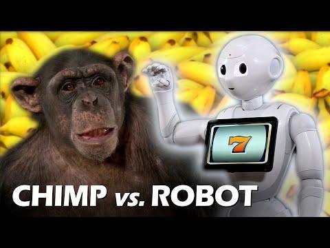 Zaubern für Schimpansen mit