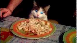 Очень голодный кот ворует еду прям из под носа!