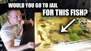 WHY THE WORLDS MOST EXPENSIVE AQUARIUM FISH IS ILLEGAL TO KEEP