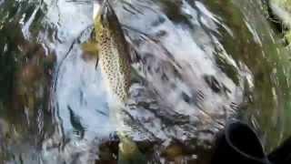 Форелька-трофеюшка  (видео-отчет) рыбалка сентябрь 2015 Ловля форели на спиннинг