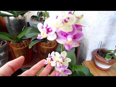 Бактериалка орхидей - что помогло/не помогло.