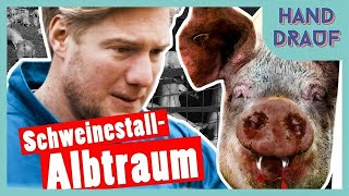 DGS | Bestrafung: Marc kriegt Panik im Schweinestall | DSDN