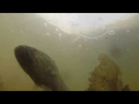 Haworth, N.J. Duck Pond Bass Fishing GoPro (Underwater View)