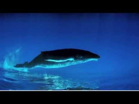 Baleines -  Bande-annonce FR