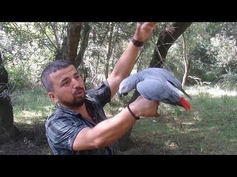Papağan buldum! Sahibini görünce KonuşmayaBaşladı 😲😰