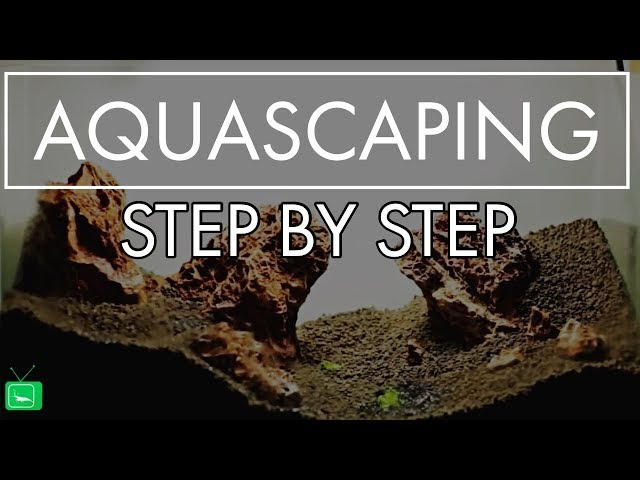 AQUASCAPING STEP-BY-STEP - EINFACH ERKLÄRT |  Tutorial