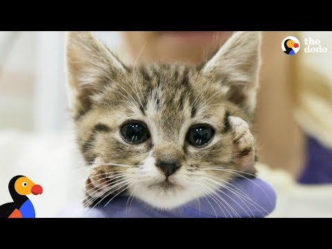 Wobbly Kitten Gets Kitty Casts To Help Him Walk Again | The Dodo