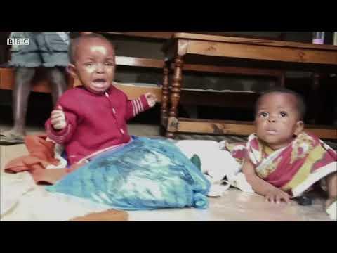 Zabijáčtí mravenci - BBC Earth