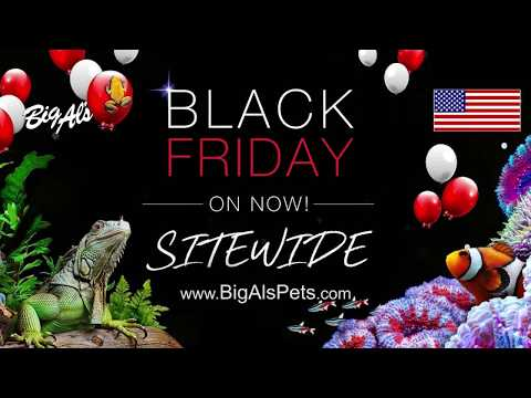 Black Friday Deals are ON NOW! (Video)